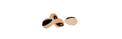 black-eyed-peas-2