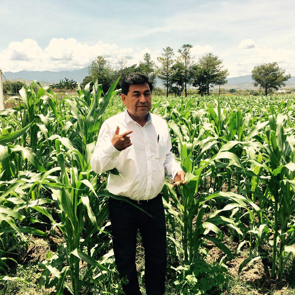 Flavio Aragón-Cuevas in a field of maize. Photo by Stephen Satterfield.