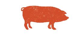 pig icon orange